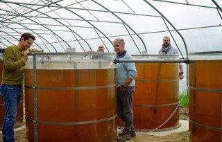 Boeren+verbeteren+met+algen+waterkwaliteit