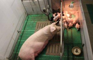 Dierenbescherming+stelt+Deltaplan+Awards+in