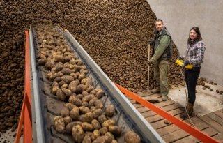 Aardappelteler+maakt+zich+zorgen+over+komend+seizoen