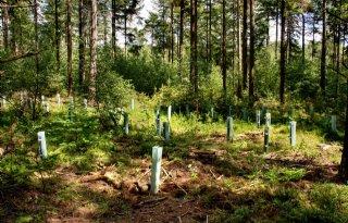 Flevoland+past+bossenplan+aan+na+commentaar+LTO+Noord