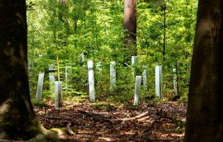 Onrust+over+aanleg+Flevolands+bos