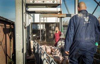 Ruimte+op+Duitse+biggenmarkt+groeit+verder+voor+Nederlandse+varkenshouder