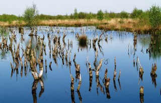 Consultatie+voor+Natura+2000%2Dgebied+Engbertsdijksvenen