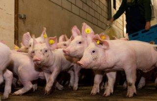 Bron%2D+en+contactonderzoek+PRRS+bij+varkens