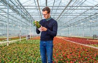 Potanthuriumkweker: 'Biostimulant laat plant het werk doen'