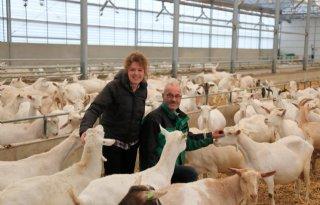 Voersysteem verstrekt individueel krachtvoer aan melkgeiten