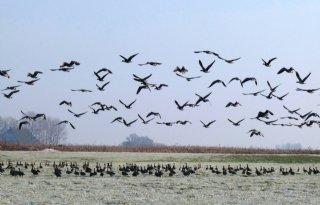 Risico besmetting vogelgriep blijft zeer hoog