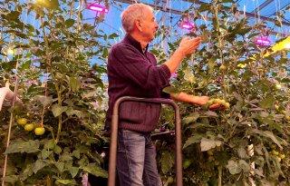 Techniek+loodst+tomatenbedrijf+naar+circulair