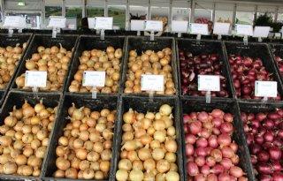 Zuid-Europees bloed maakt uien sterker tegen droogte