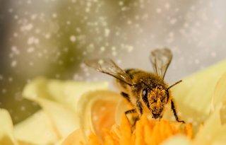 Start bijenproject Place to Bee van LTO Noord