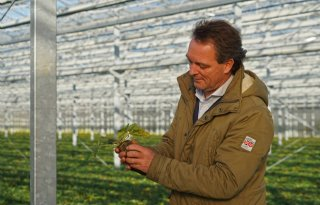 Nieuwe duurzame kas bezorgt Flevoplant dubbele omzet