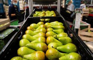 GroentenFruit Huis blij met uitstel Britse importeisen