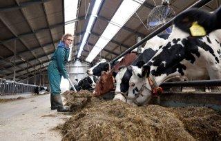 Simone Uijttewaal: 'Ik leer de boerderij nu opnieuw kennen'