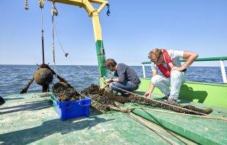 Colruyt krijgt vergunning voor zeeboerderij in Noordzee