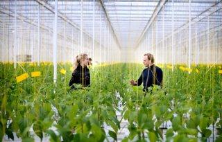 Platform Tuinbouwreststromen toont meerwaarde voor teler