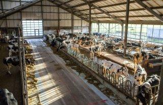 Melkveehouder+Van+den+Bosch%3A%27Elk+jaar+kalf+niet+meer+van+deze+tijd%27