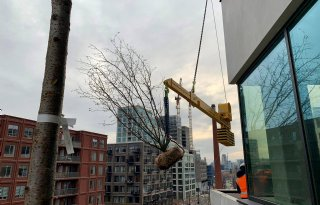 Brabantse kweker levert bomen voor eerste verticale bos