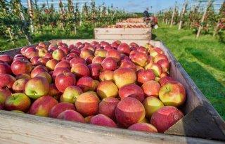 Albert Heijn wil met appel Sprank naar 4 miljoen kilo
