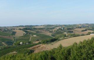 EU%2Dsteun+voor+project+kleine+olijfolieproducenten