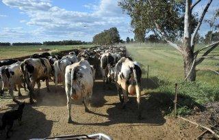 Australische+landbouw+steeds+vaker+in+buitenlandse+handen