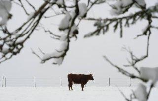 Vochtgehalte+in+Achterhoekse+bodem+op+peil+dankzij+sneeuw