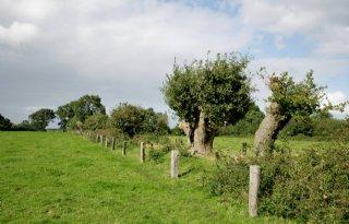 Landbouwgrond+Steenwijkerland+is+%27ineens+stikstofgevoelig%27