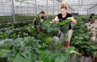 Inholland+Academy+biedt+gratis+scholing+in+glastuinbouw