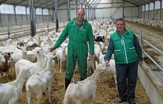 Veehouders melken door fosfaatregels geiten in plaats van koeien