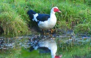 Vogelgriep treft Slowaakse dierentuin