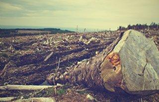 WWF%3A+ontbossing+verwoest+wereldwijd+43+miljoen+hectare+natuur