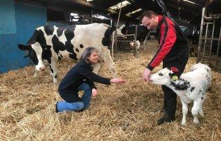 Melkveehouders zoeken kansen voor nieuw keurmerk