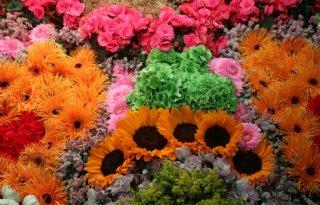 Teeltadviseur+zomerbloemen+gaat+samen+verder+met+Delphy