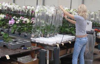 Export planten naar record maar snijbloem krimpt