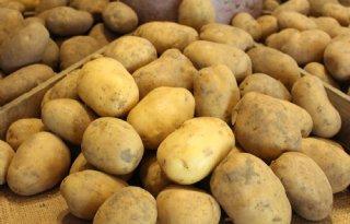 Spaanse aardappeltelers oogsten 5 procent minder