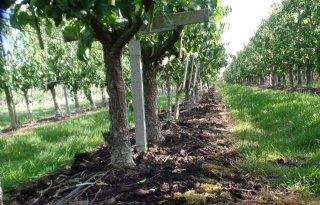 Fruitteler kan uit de voeten met organische mest