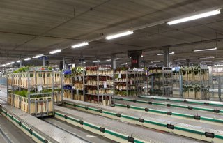 Vogelgriep vastgesteld in Hongarije, tweede R&O verplicht