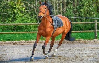 Paardensector in zwaar weer door corona