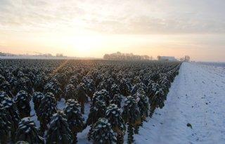 Lokaal+tot+25+centimeter+sneeuw+voorspeld