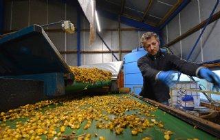 Bollenteler Huetink: 'Opbrengst hoeft met precisielandbouw niet per se omhoog'