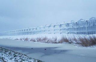Veel schade in glastuinbouw door winterweer