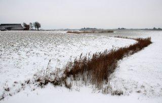 Cosun: 'Stevige winter kan bietenteler helpen'