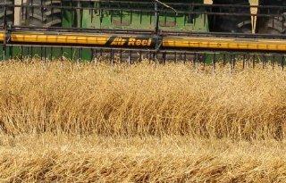 Abares+voorspelt+recordoogst+tarwe+voor+Australi%C3%AB