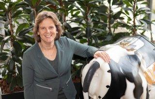 Kunstkoe+geeft+studenten+beeld+van+voortplanting+bij+koeien