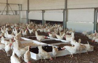 Mestschuifel+helpt+bij+verwijderen+fijnstof+in+kippenstal