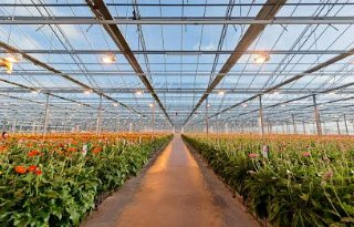 HilverdaFlorist+breidt+productiekassen+jonge+planten+uit