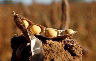 In Polen is ruimte voor eiwithoudende gewassen