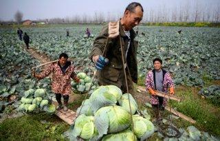 China investeert in modernisering landbouw