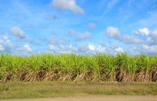Rabobank+verwacht+groter+tekort+op+suikermarkt