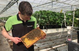 Honing is bijzaak voor imker Mario Coremans