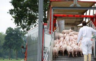 Handel in varkens en biggen minder hectisch